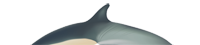 illustration of the dorsal fin of a common dolphin