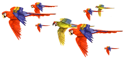 illustrations of Macaws