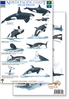id guide to wildlife in the Pacific Northwest, such as whales, bears, fish, birds, and more