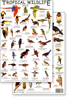 a series of id guides to tropical wildlife, including amphibians, birds, butterflies, mammals, reptiles, and reef fish