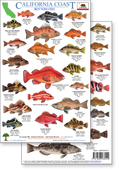 id guides to rockfish and other California bottom fish