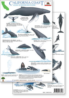 id guides to whales and dolphins, and their behaviors